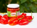chiles-habanero-pasta-roja