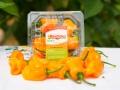 clamshell-naranja
